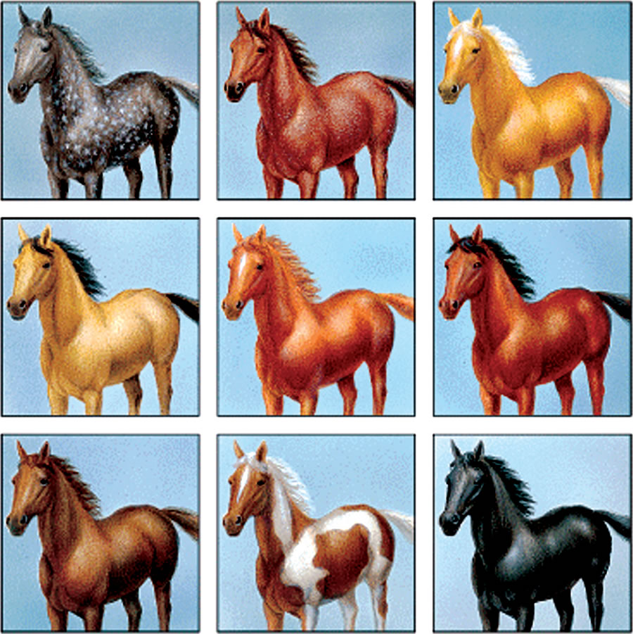 Boje-konja