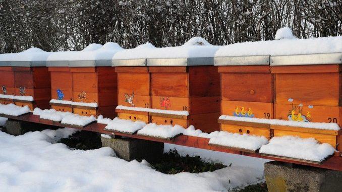 Radovi na pčelinjaku-Decembar