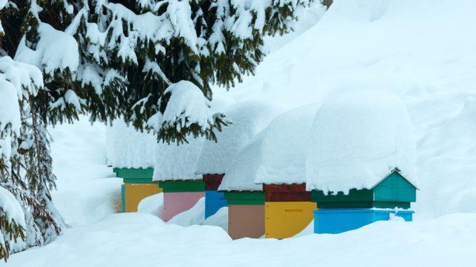 Radovi na pčelinjaku Januar