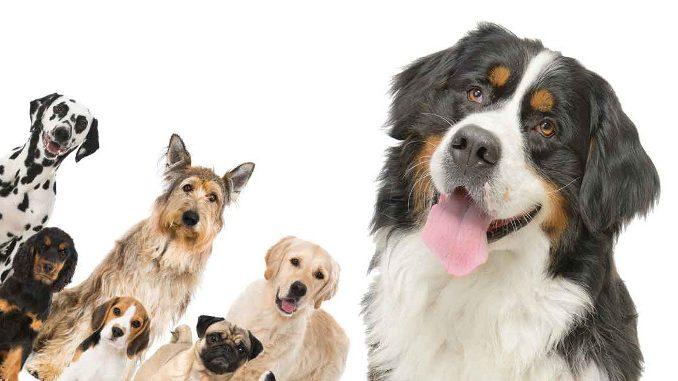 Bernski planinski pas djeca i ostali kućni ljubimci