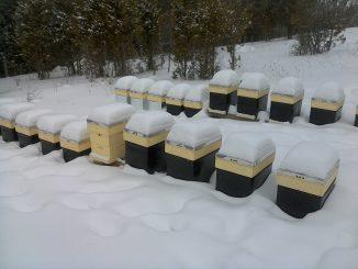 pčele zimi