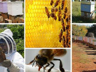 Radovi-pčelinjaku