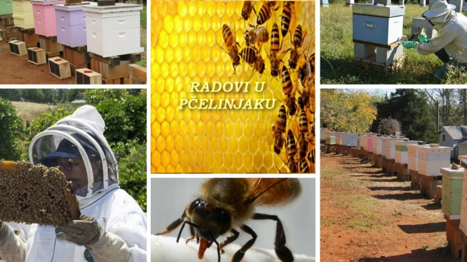 Radovi u pčelinjaku oktobar