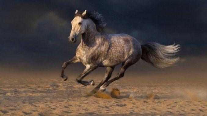 Andaluzijski konj