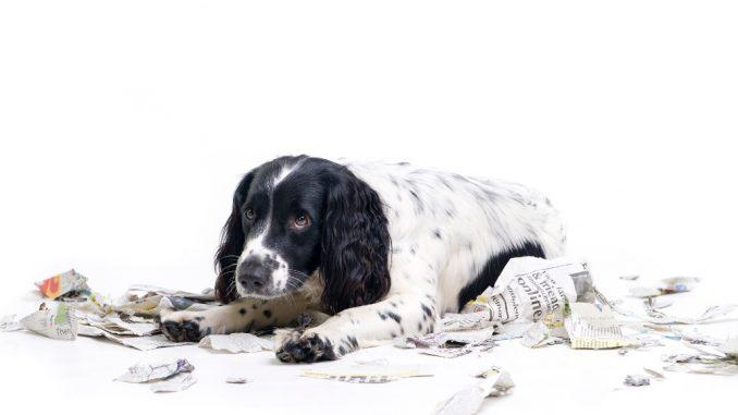 Kako naučiti psa da nuždu obavlja na jednom mjestu